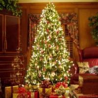 Christmas Tree, O Christmas Tree…