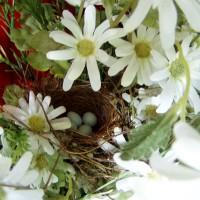 House Finches Nest in Door Basket