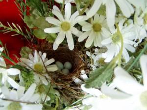 Nest+006