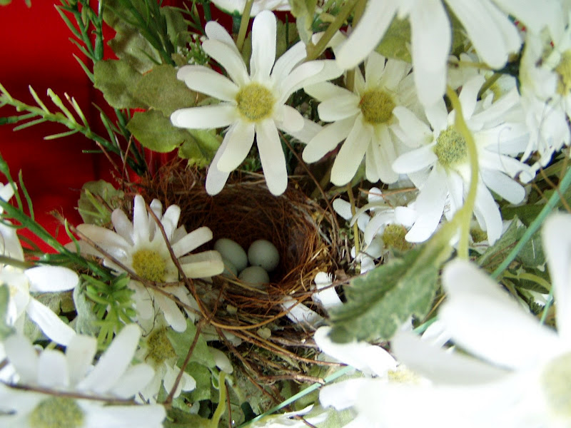 House Finches Build Nest In Front Door Basket