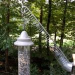 The Escalator to Nowhere, Foiling a Pesky Squirrel