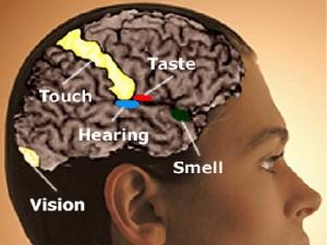articles-synesthesia-brain