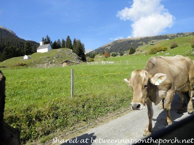 Switzerland Cow