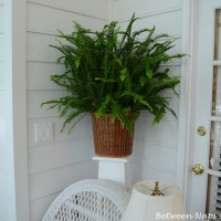 Kimberly Queen: The Shed-free Fern