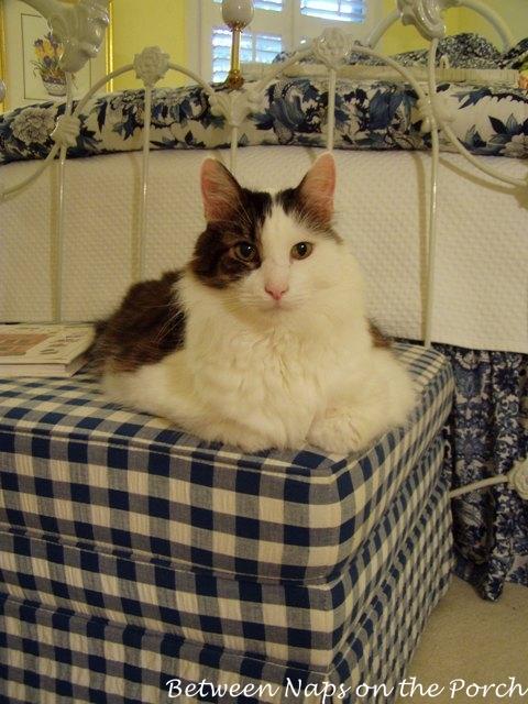 Max in Guest Bedroom