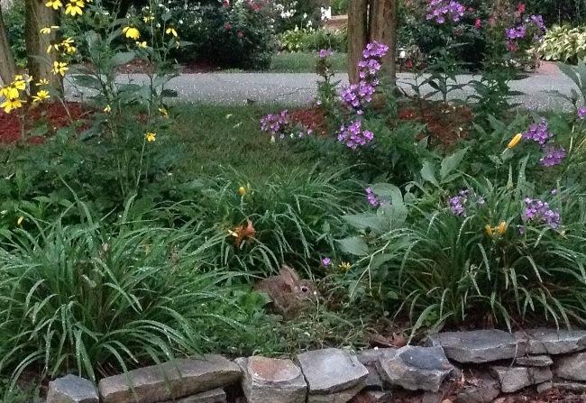 Bunny in Perennial Garden
