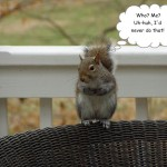 Squirrel Wars: The Latest Trick Up My Sleeve