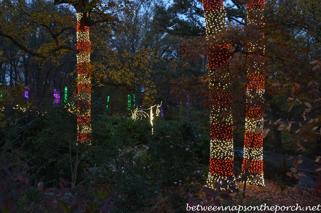 Discount coupon for atlanta botanical gardens lights