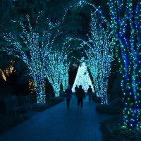 Atlanta Botanical Garden: Garden Lights, Holiday Nights