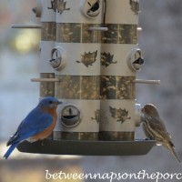 Birdwatching: Cardinals, Bluebirds and Woodpeckers Came Calling