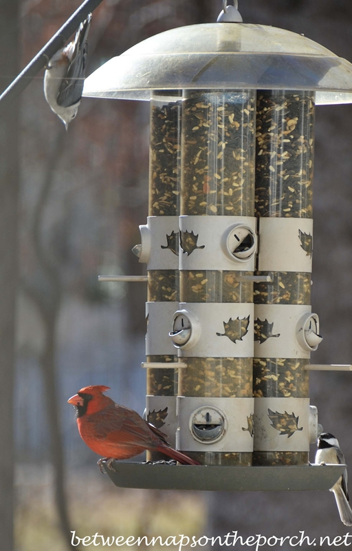 Cardinal, Chickadee and Nuthatch on Feeder