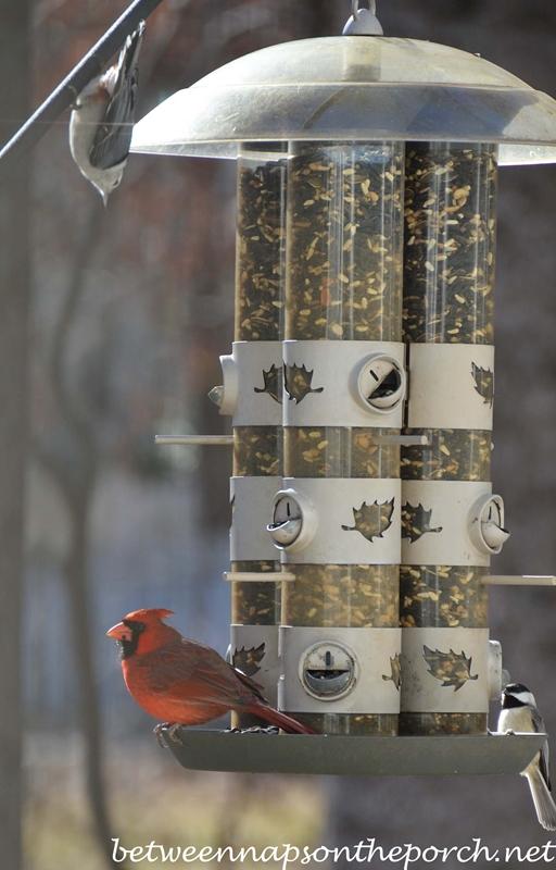 Cardinal, Chickadee and Nuthatch on Feeder