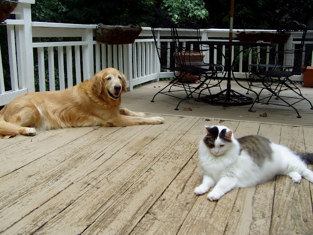 Old Deck with Max and Jake