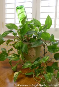 Keep Plants Watered While on Vacation