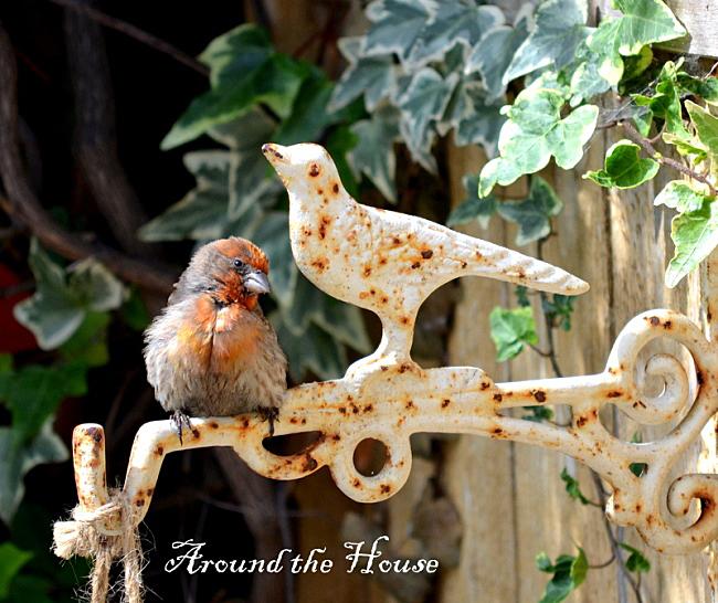 Adorable Birdie