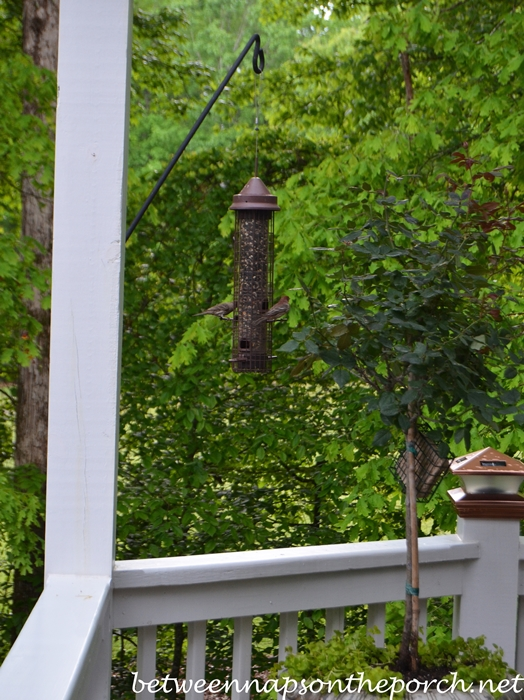 Bird Feeder Hanging from Shepherd's Hook
