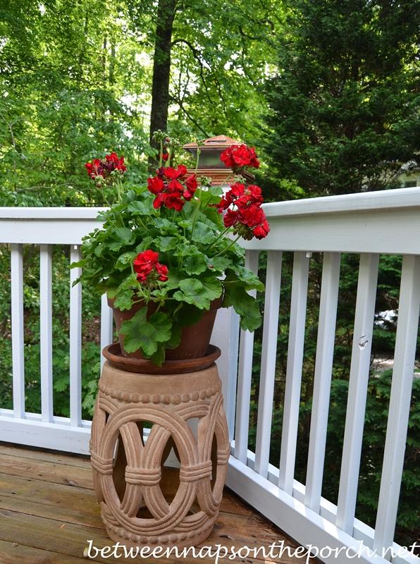 Garden Seat with Geranium on Deck