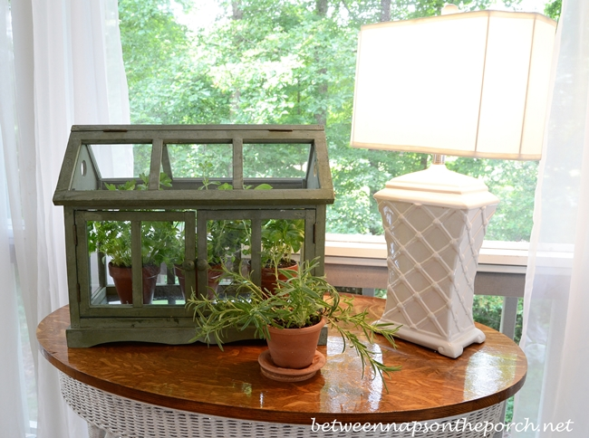Growing Herbs in a Tabletop Greenhouse