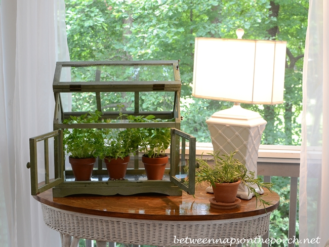 Great Growing Herbs In A Tabletop Greenhouse