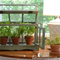 Growing Herbs in a Tabletop Greenhouse 3