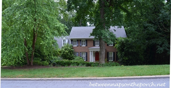 House Hidden and Overwhelmed by Trees and Shrubs 1
