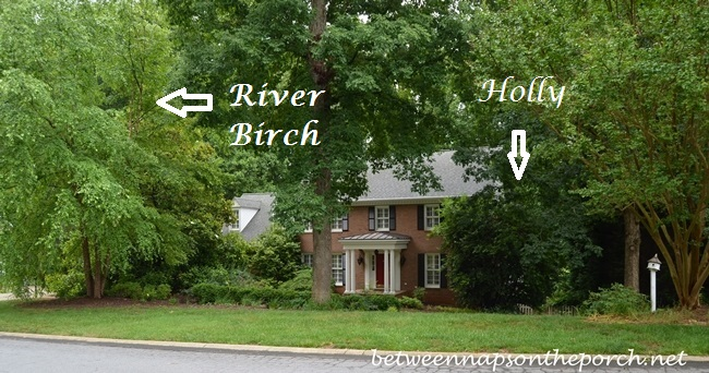 House Hidden and Overwhelmed by Trees and Shrubs
