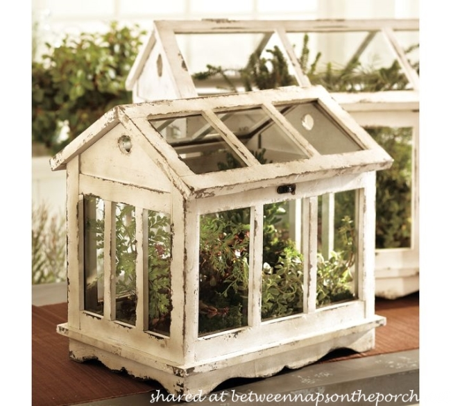Great Pottery Barn Greenhouse Terrarium