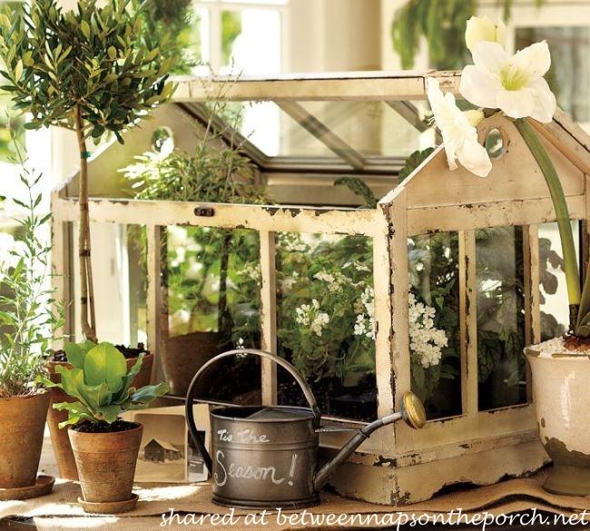Pottery Barn Greenhouse Terrarium
