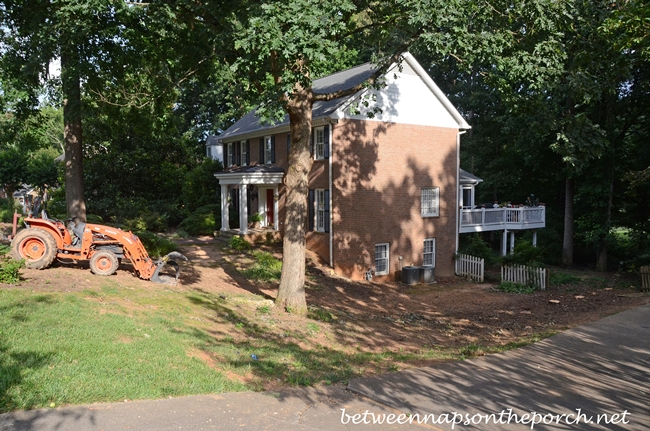 Removing Leyland Cypress 2