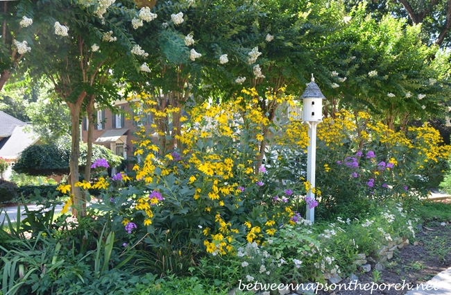 Perennial Garden with Common Purple Phlox, Rudbekia Herbstonne and Yarrow, Oertel's Rose