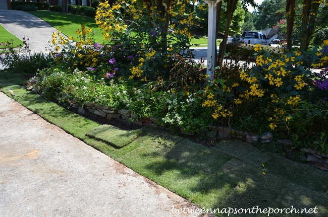 Sodding around a Perennial Flower Bed 4