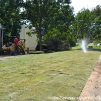 Zeon Zoysia for the Front Yard