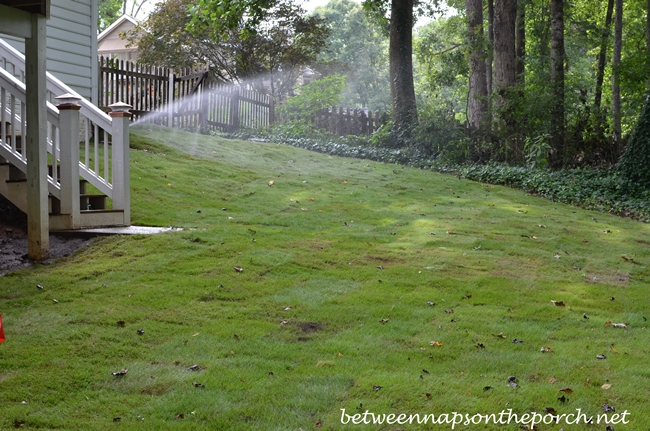 Backyard Sodded with Zeon Zoysia_wm