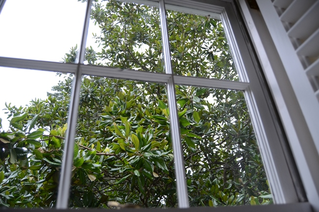 Cleaned Window
