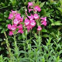 Create a Small, Sun-Loving Perennial Garden
