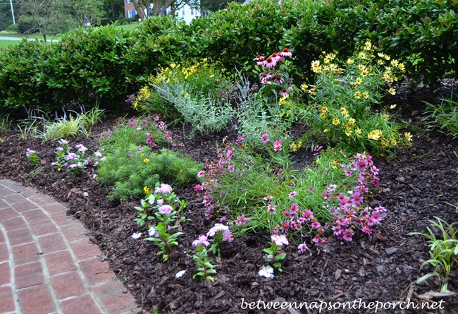 Perennial Garden with Russian Sage, Coreopsis Moonbeam, Coreopsis Heaven's Gate, Tickseed