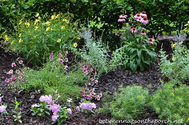 Perennials in Garden