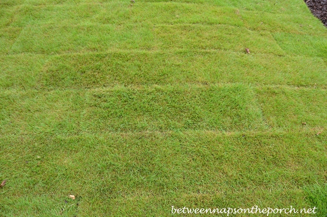 Zeon Zoysia in Longer Pieces
