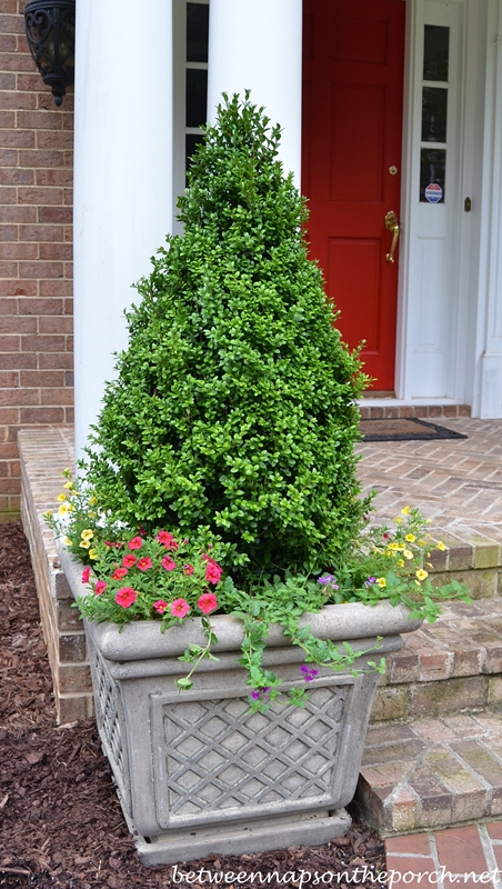 Container Gardening with Boxwood Topiaries in Lattice Planters