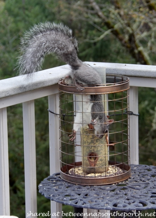 Wildlife visitors to the autumn garden - How do you keep squirrels out of your garden ...