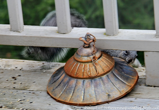 Squirrel Stealing Lid off Birdfeeder_wm