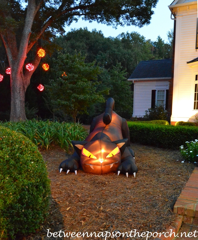 Black Cat for Halloween Decorating