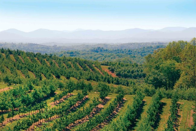 Business Feature - Mercer Orchards II