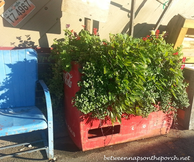 Coca-Cola Cooler with Plants_wm