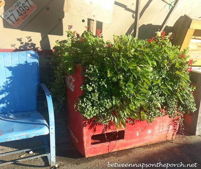 Coca-Cola Cooler with Plants_wm