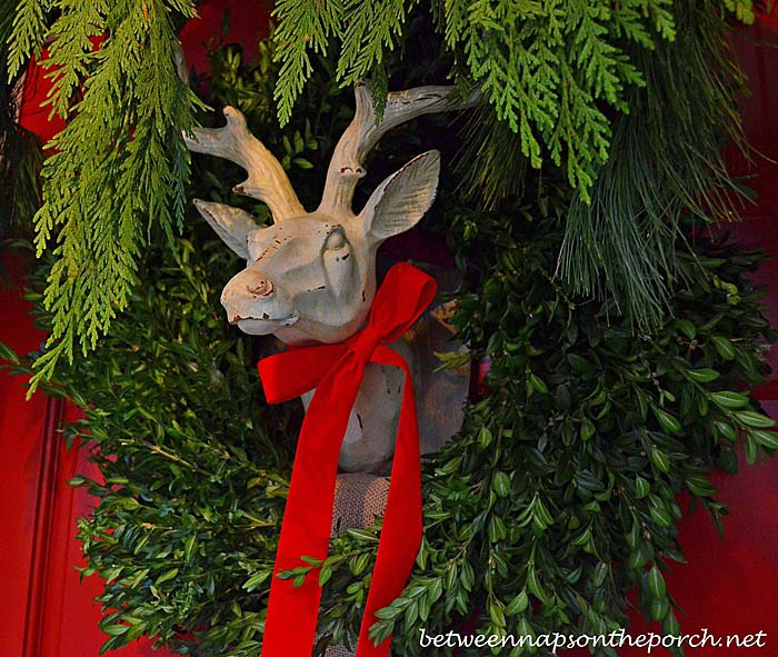 Boxwood Wreath for Deer Head