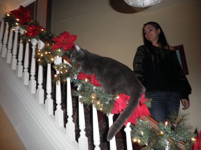 christmas banister decorated with a kitty cat - Christmas Decorations For Stair Rail