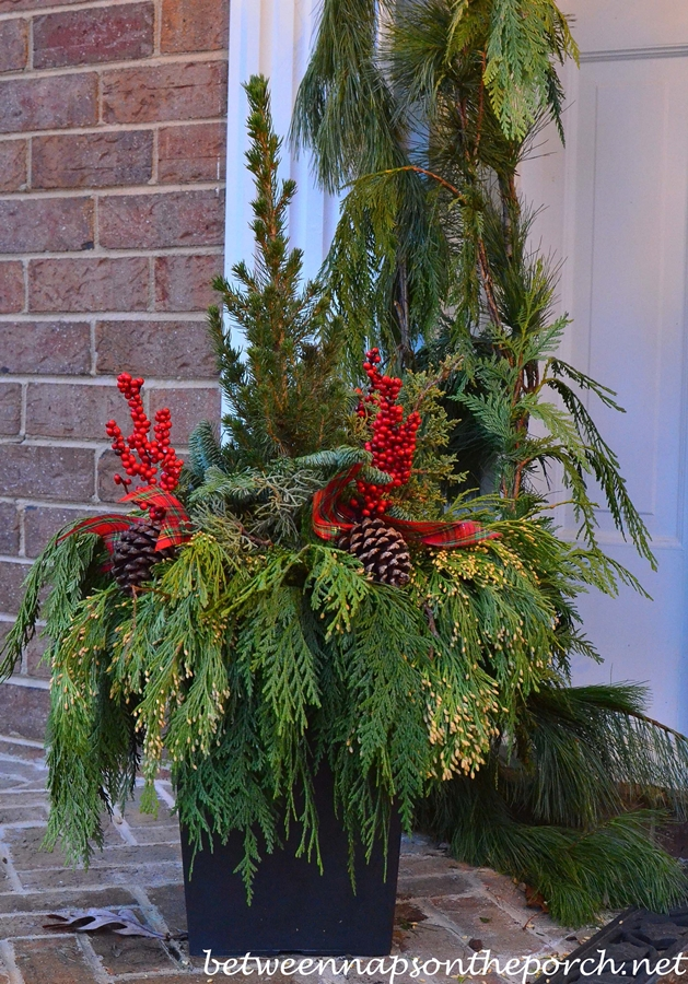 Christmas Plant for a Front Porch