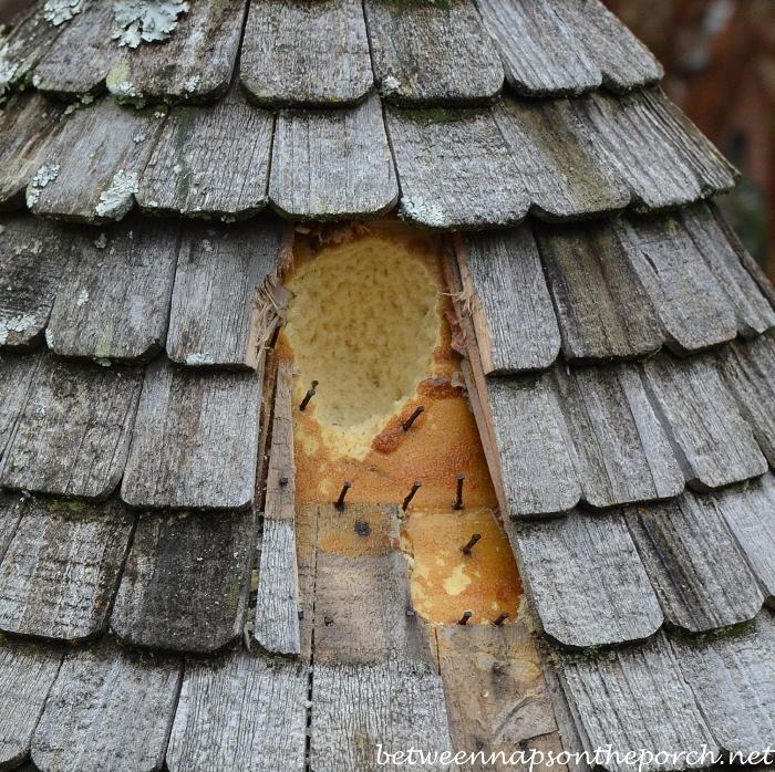 Woodpecker Damage to Dovecote