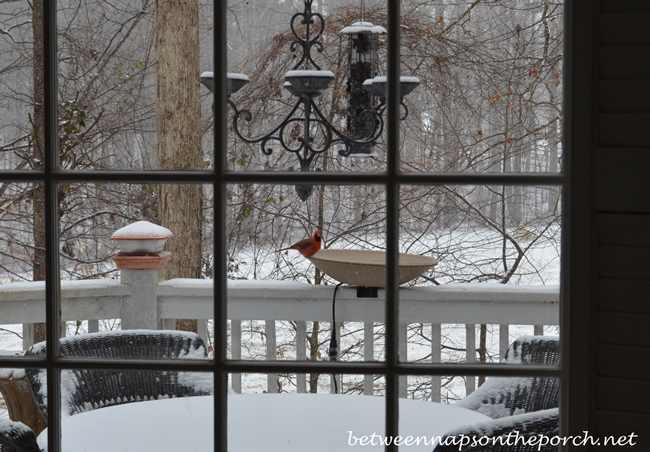 Cardinal Enjoying Heated Bird Bath